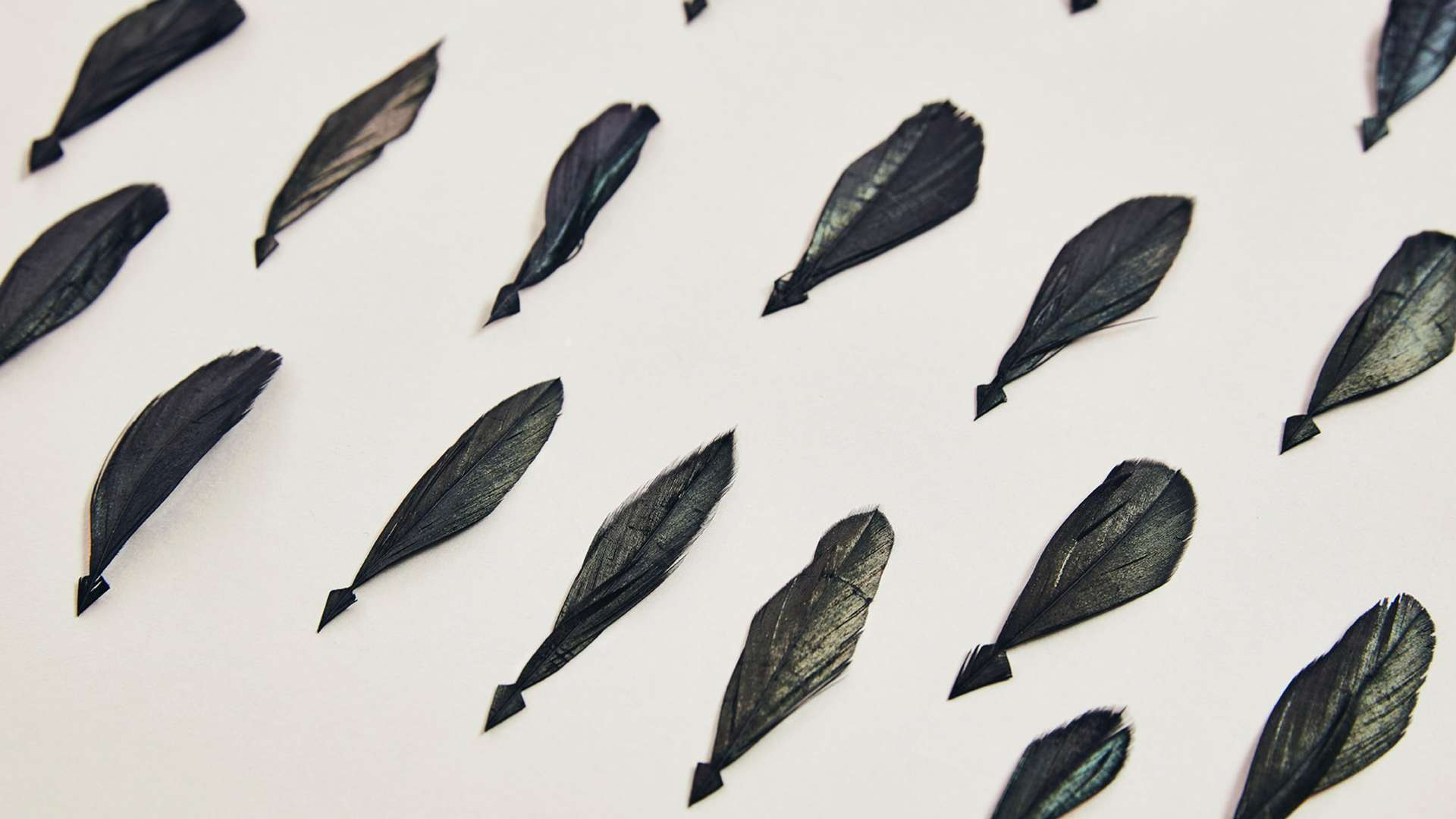 A close up of some of the 3,000 iridescent tail feathers used to create a Bespoke Phantom Gallery