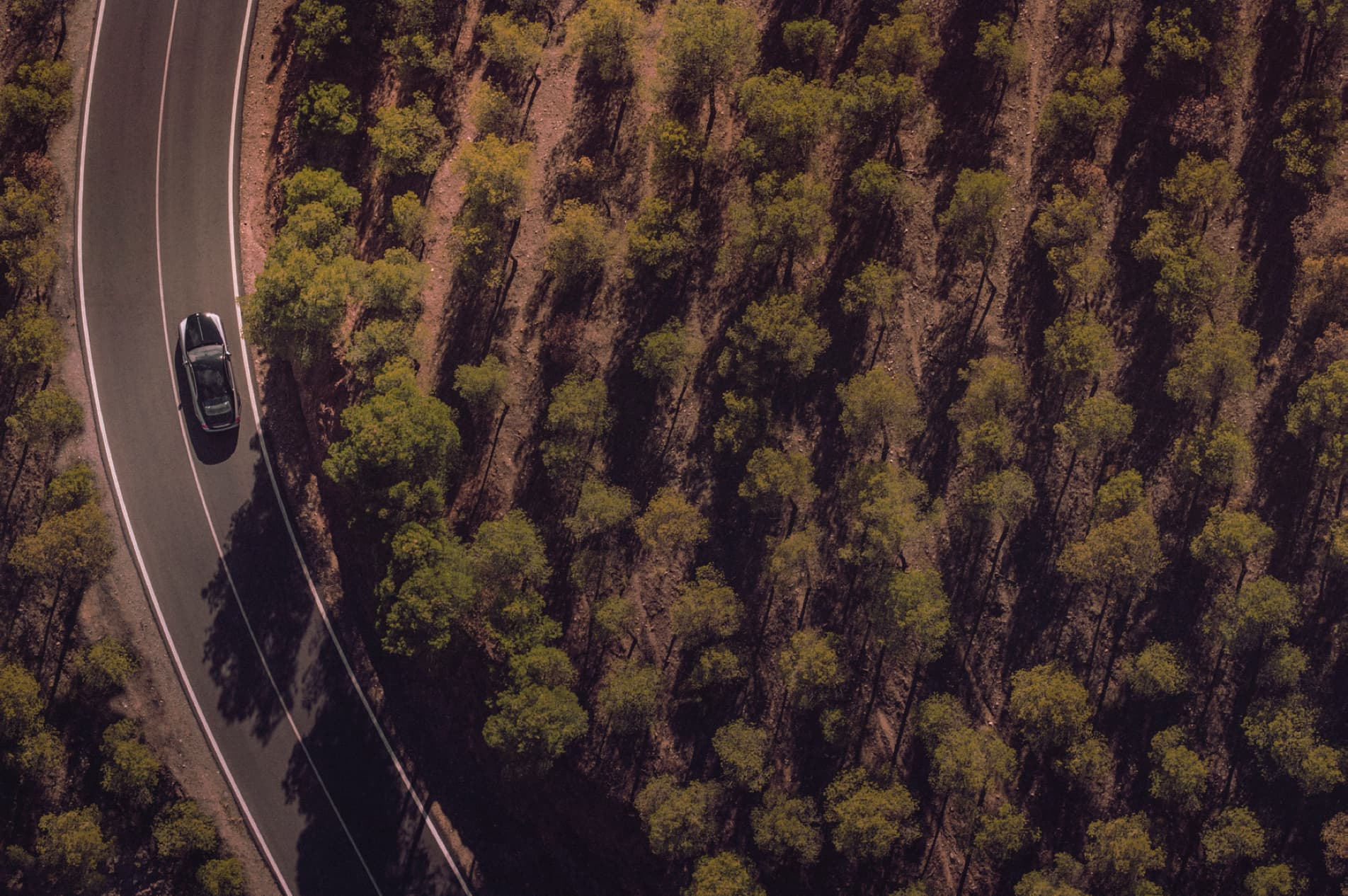 Aerial shot of Rolls-Royce motor car driving next to woods